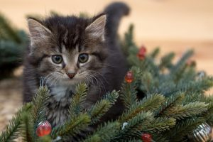 kitten in the Christmas decorations